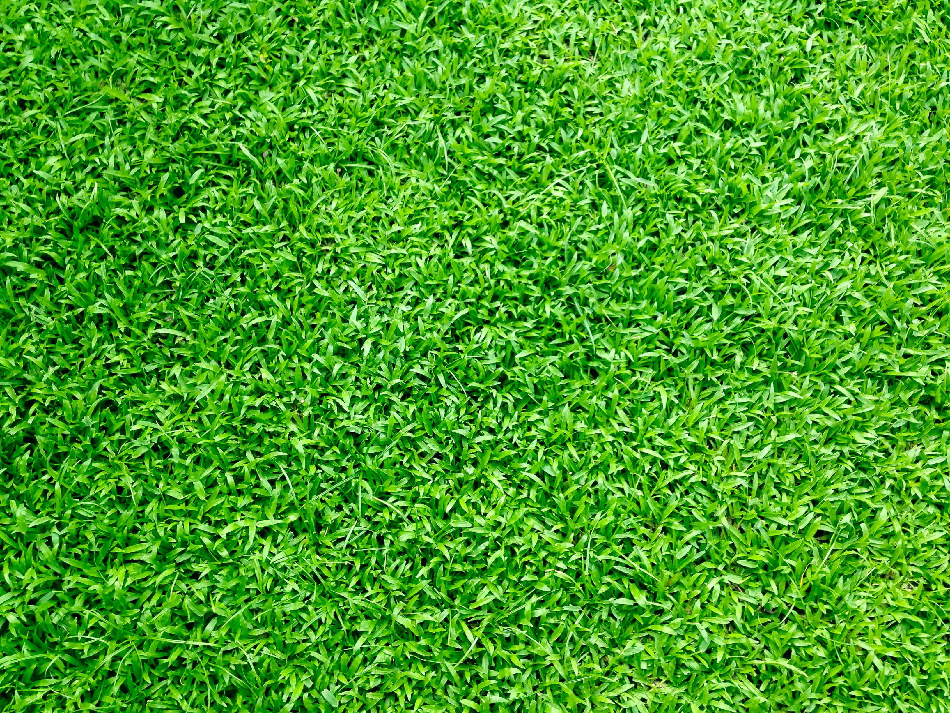 Appealing benefits of synthetic turf that you should know!
